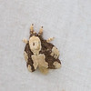 2017_ moth_Canopy Camp_Darien_Dec_IMG_9839