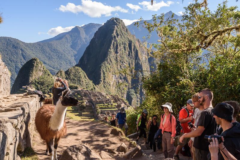 20160603Machi Picchu-11.jpg