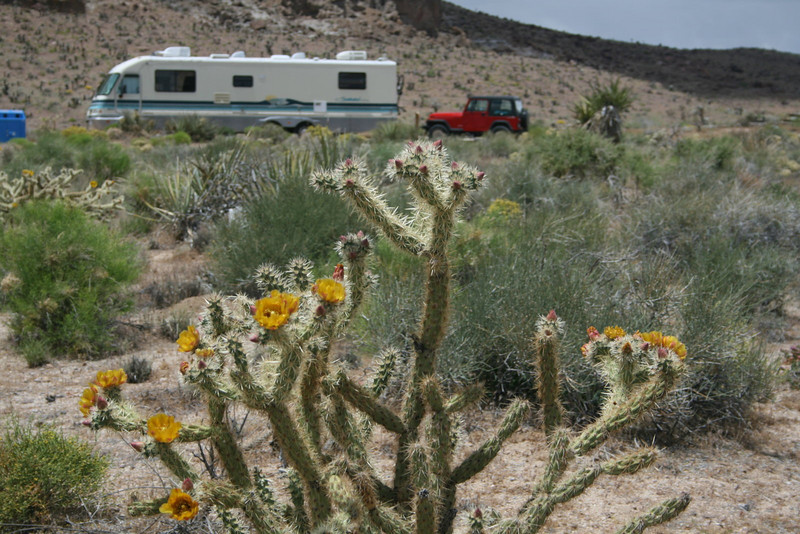 On the way from Flagstaff, Arizona to Long Beach, California, we stopped at our favorite desert campground,  Hole in the Wall, located in the Mojave National Preserve between I-15 to the north and I-40 to the south and near the California/Arizona border.