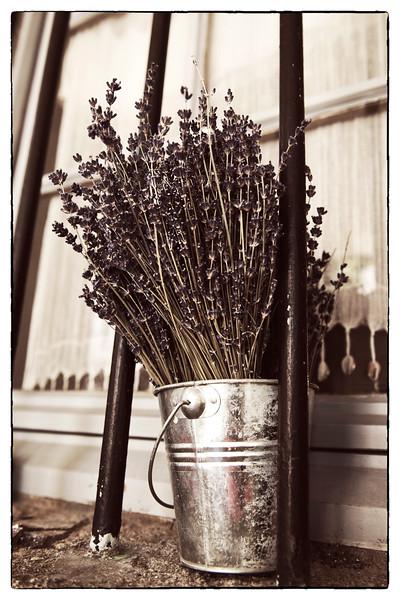 lavender in pot.jpg