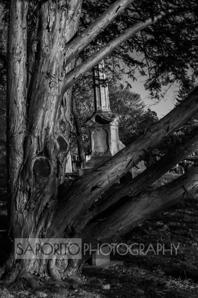 Cedar and Cemetery