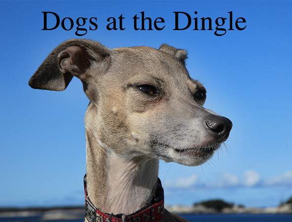 Dogs at the Dingle