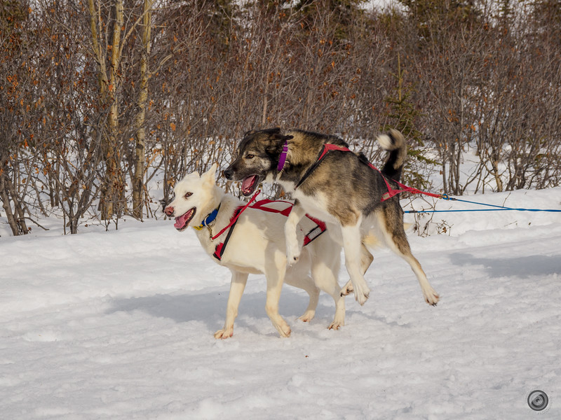 20190325_Blaire_and_Liz_Mushing_25.jpg