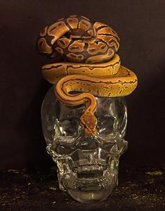 Creative Photos   Snakes