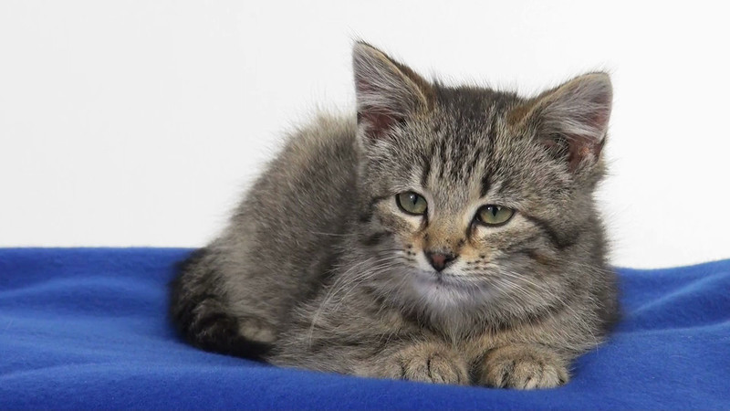 kitten_546_02.mov