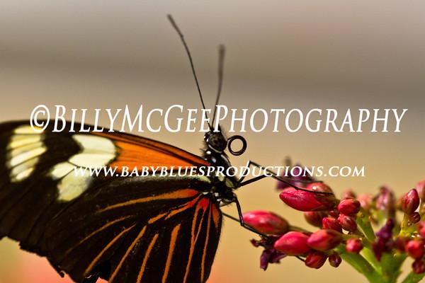 Smithsonian Museum of National History - Butterflies - 17 Jun 2011
