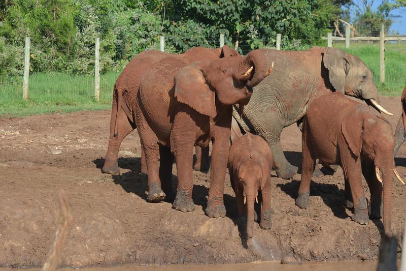 East Africa Safari 68.jpg
