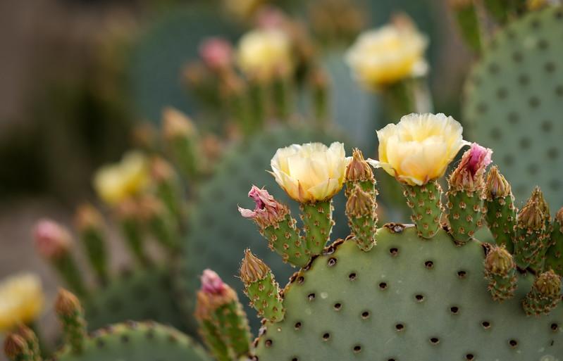 Tucson_17-645.jpg