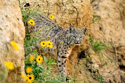 Newport Beach Back Bay Wildlife