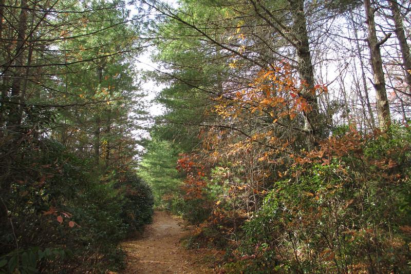 Panthertown Valley Trail - 3,800'