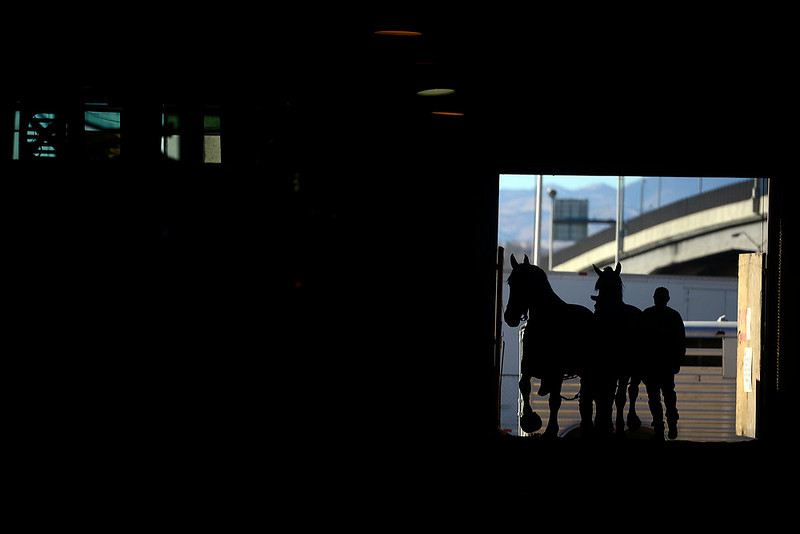 . Andrew Stahliem walks in with a pair of horses in preparation for the National Western Stock Show at the complex on Wednesday, January 9, 2012.