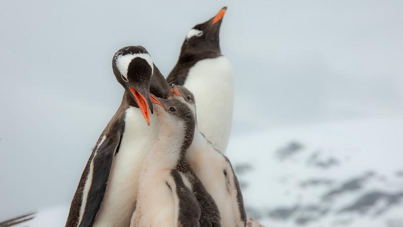 2019_01_Antarktis_04465.jpg
