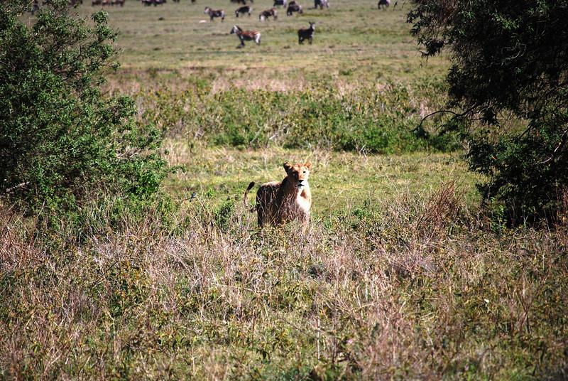Ngorongoro (85).JPG