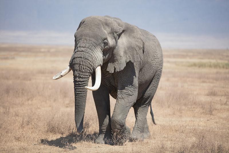 Africa - 101816 - 7766.jpg