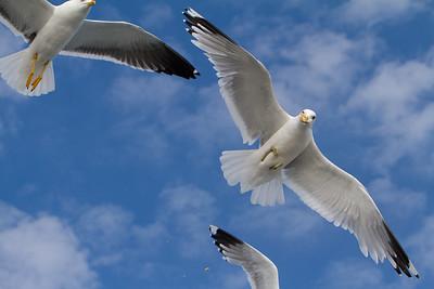 Seagulls 04-05.07.2011