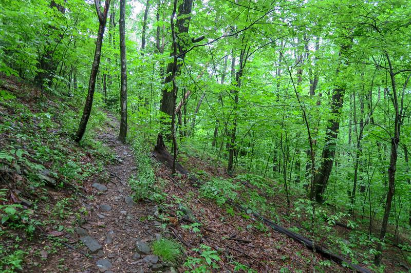 Barnett Branch Trail -- 3,500'