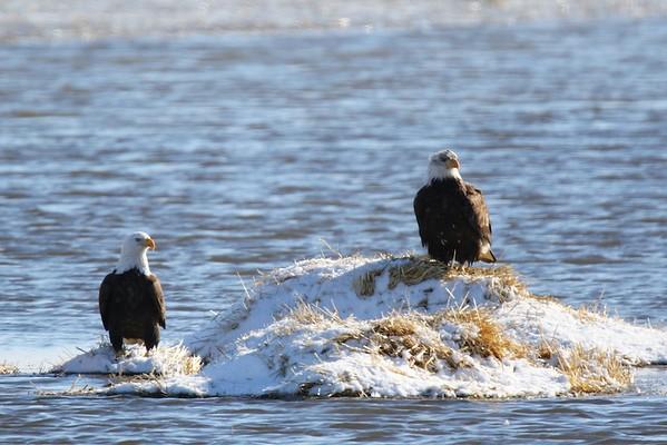 Klamath Falls eagle trip Feb 2017