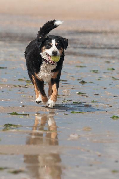honden-05658.jpg