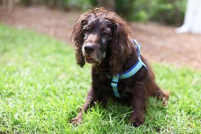 Brenner Pup