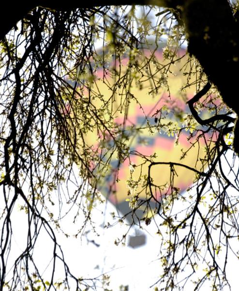 TreeBalloonCrop3.jpg
