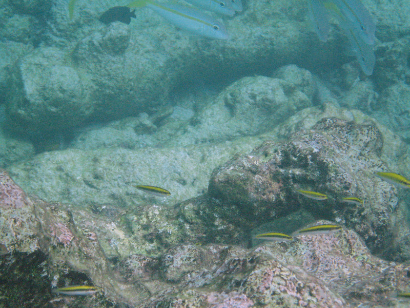 Some colorful fish on our snorkeling excursion in Bonaire.