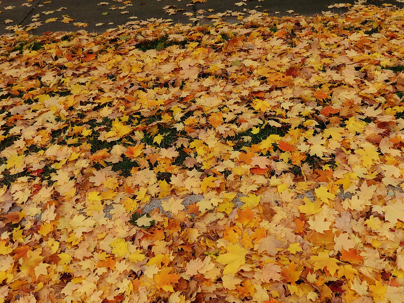 lots_of_leaves_on_the_ground___stock_image_by_brighteyesgal-d5ij3sk.jpg