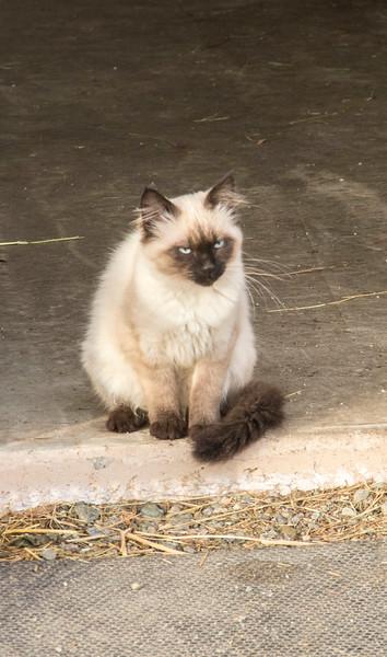 KELLI ANNS KITTY KATS