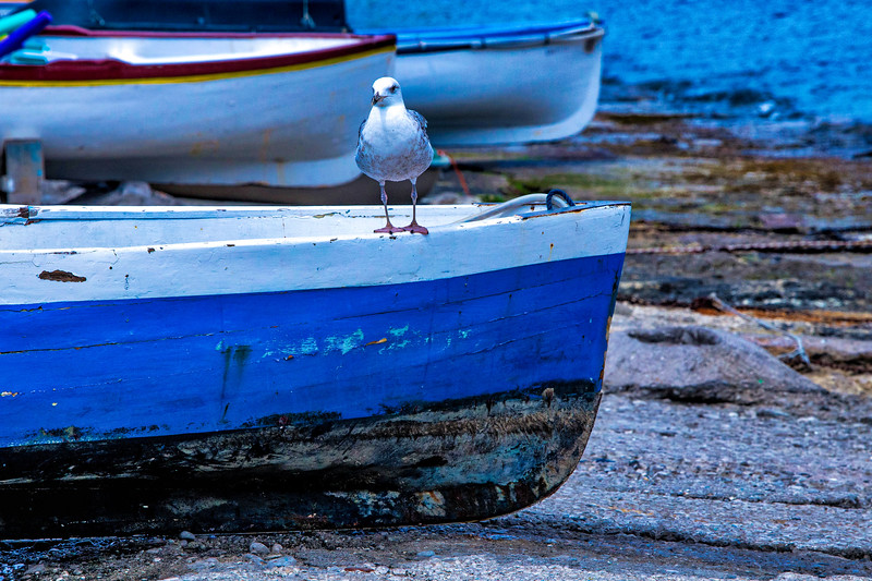wayne-gooden-seagull-boat-capri.jpg