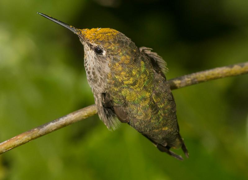 Nectar Head