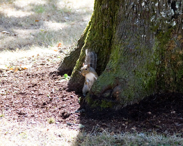 squirrel in the park.jpg