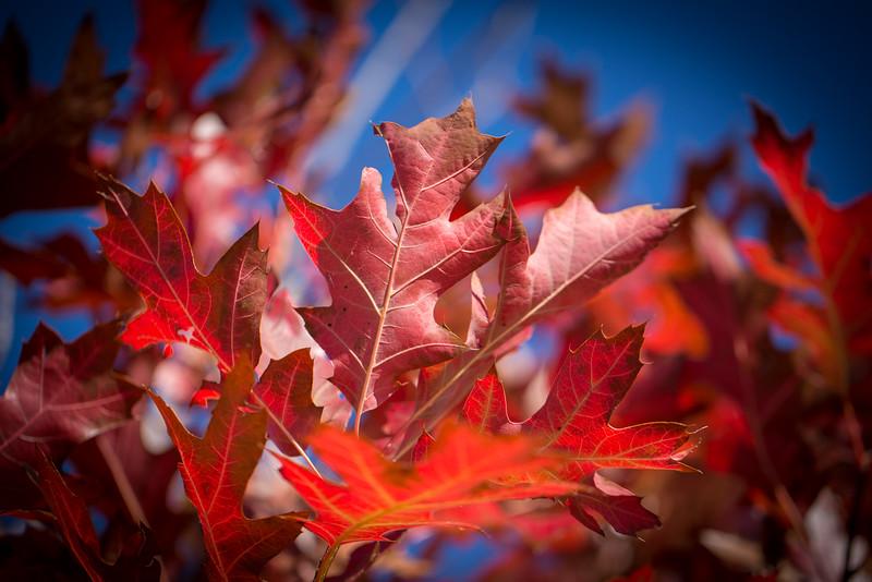 20151024-Fall Colors-87.jpg