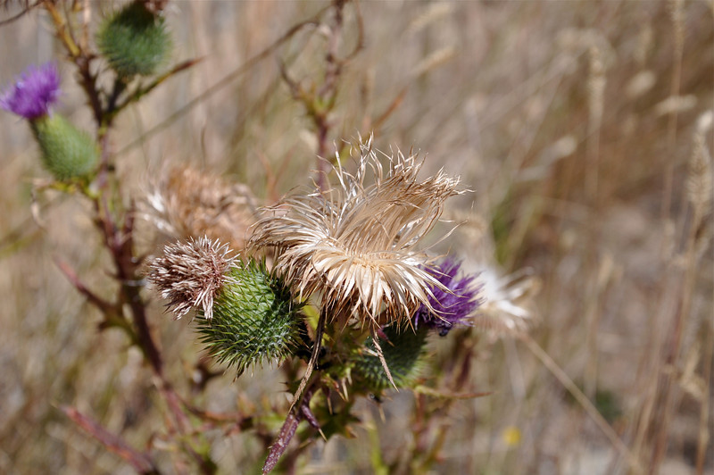 Remember these burrs that used to stick to your pants and socks?