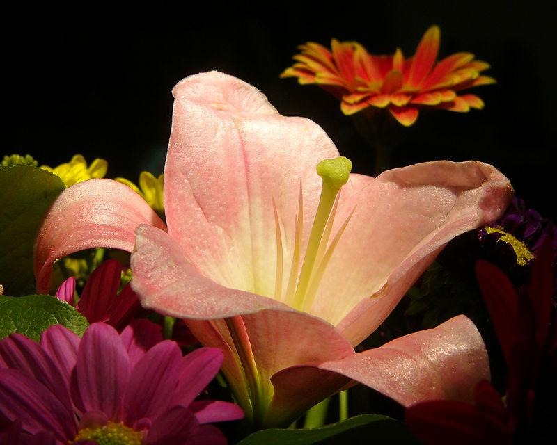 FlowersVase.jpg
