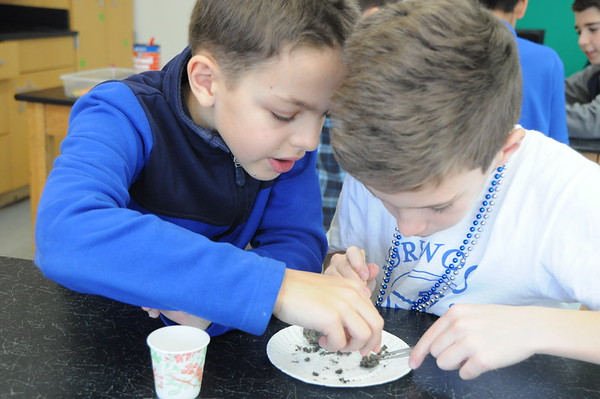 Fourth Graders Learn About the Skeletal System with Owl Pellets