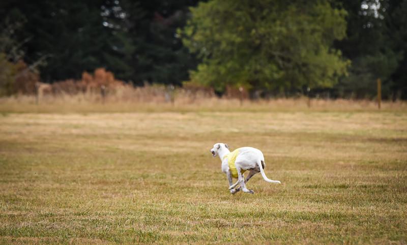 greyhound-26.jpg