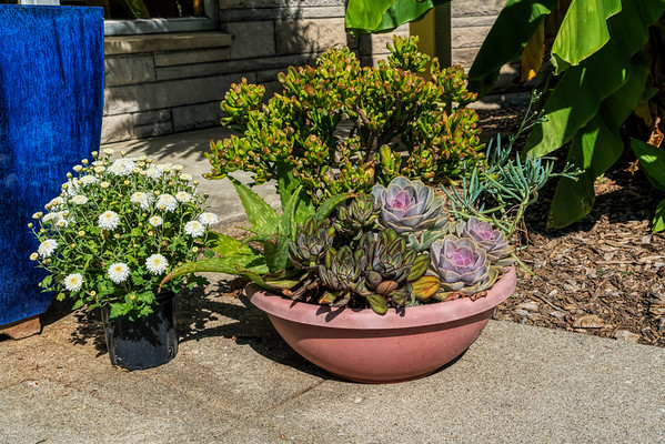 Planters of conservatory plants