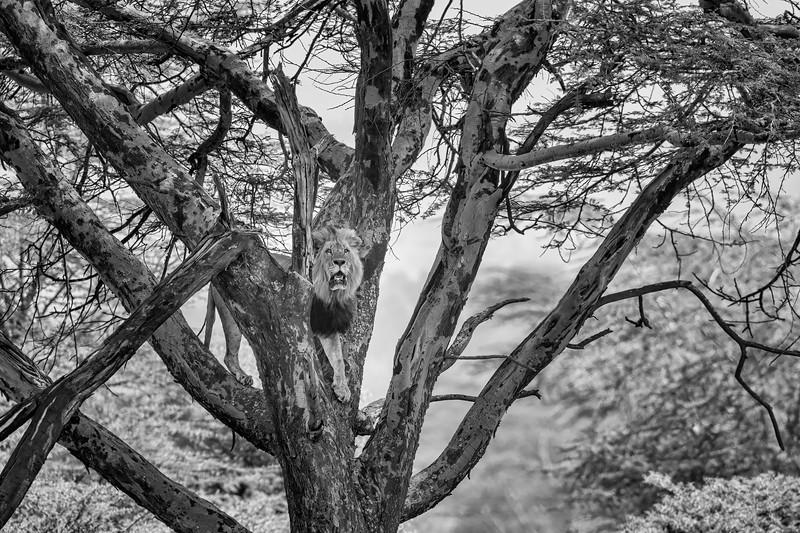 Kenya 8235b.jpg