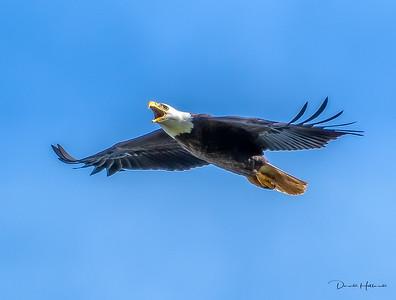 Waller County Eagles