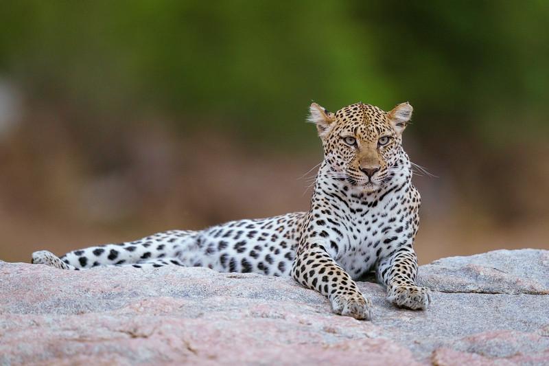 LeopardHills-20191029-2353.jpg