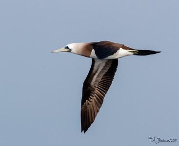 Pelagic Birding 2018
