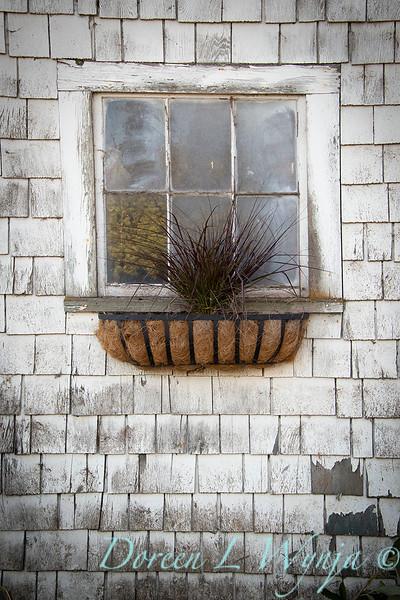 Build a fall window box - How to_7370.jpg