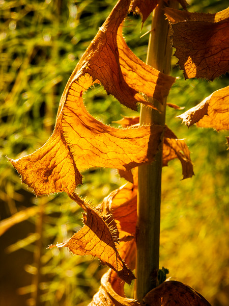 Dead leaves, Campbell, California, 2005