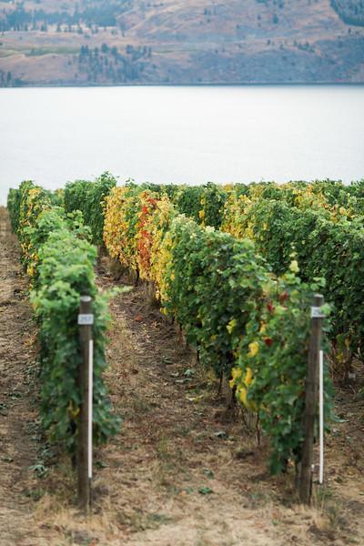 20171006_BC Wine Institute - Central & South Okanagan-2527.jpg