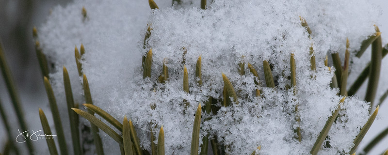 snowflakes-1721.jpg