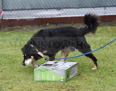 3-3-18 Dog 9