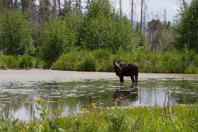2011_07_05 Wyoming 124.jpg