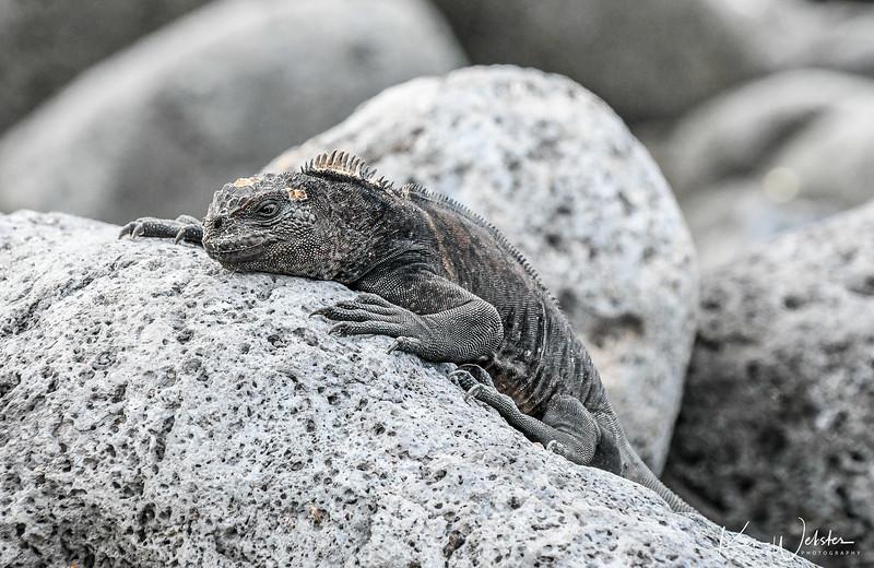 2018 Lobos Island-35.jpg