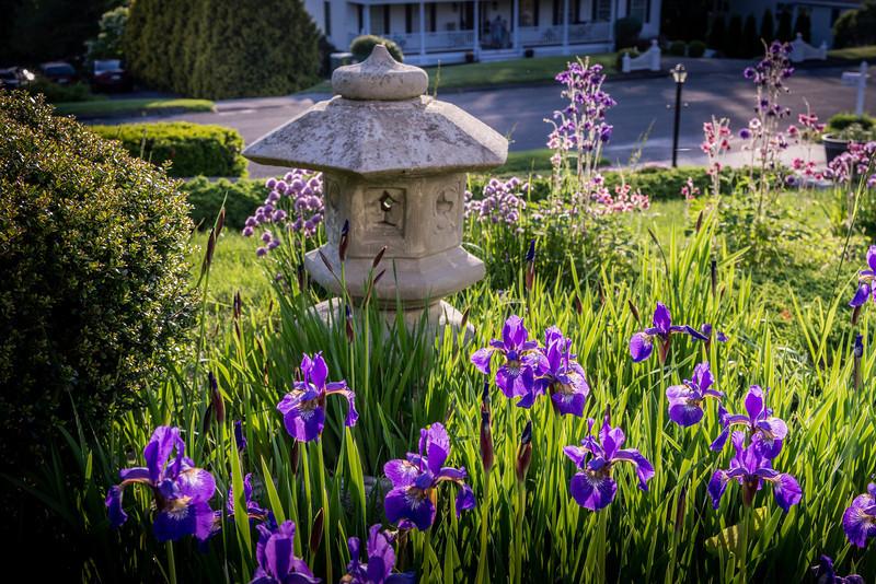 Irises and Lantern.dng