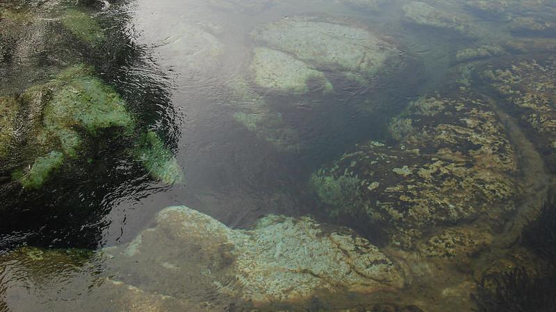 The spring basin at Salt Springs