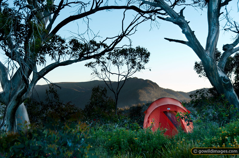 Macpac Olympus tent on Mt Speculation, with a view towards Crosscut Saw and Mt Howitt